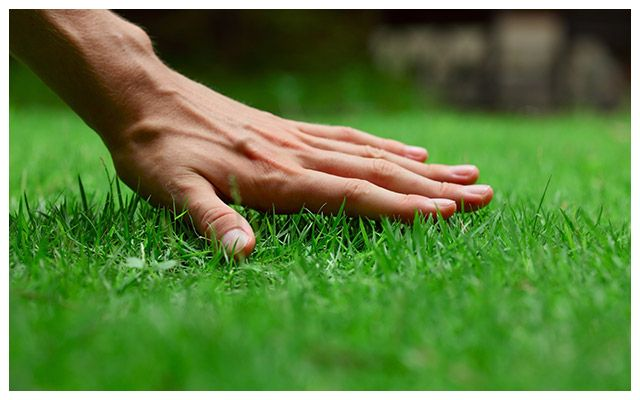 person touching grass